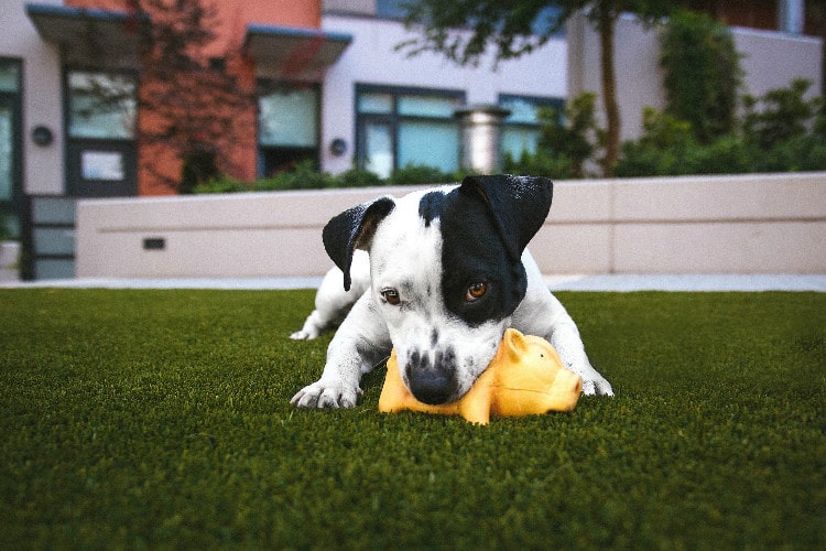 Fake grass maintenance for the home with pets in perth