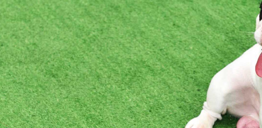 Pet Friendly Artificial grass For Dogs {Resource Guide} Rhino Lawns