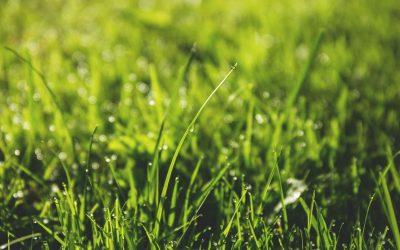 Artificial Turf vs Natural Grass: Comparing the Costs and Benefits in Perth WA